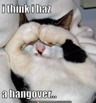 "cat: ""i think i haz a hangover..."""